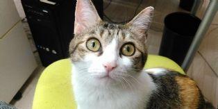 [Idée d'ailleurs] Dans cette société japonaise, amener son chat au bureau rapporte gros