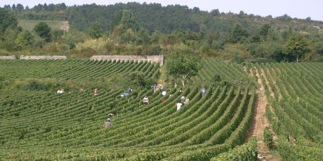 [Exclu] Les PME les plus rentables de Bourgogne-Franche-Comté