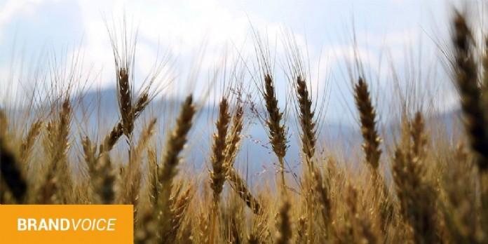 La vente de matériel agricole en ligne explose en 2020