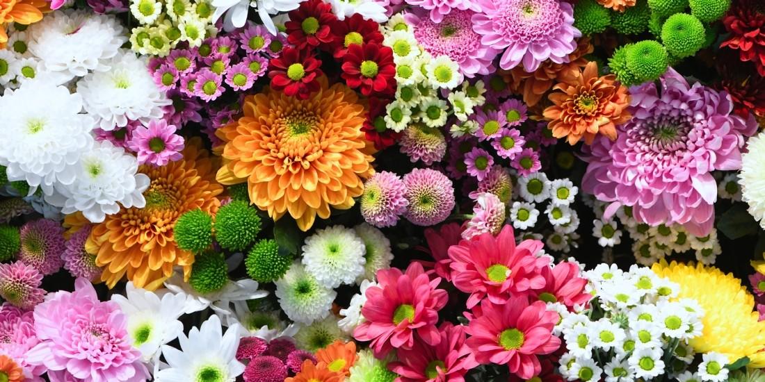 WeTradeLocal.io engrange 5,5 millions d'euros pour relocaliser la culture florale